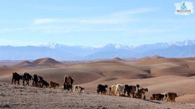 DMP-Harsh Desert-Agafay-6