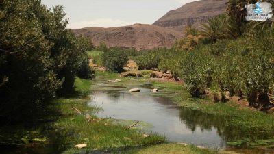 DMP-Harsh Desert-Oasis-2