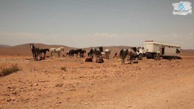 DMP-Harsh Desert-Oasis-5