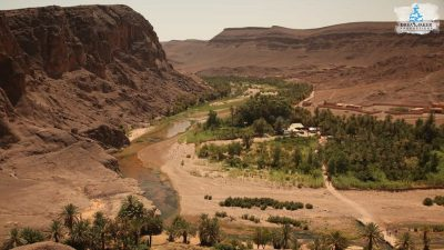 DMP-Harsh Desert-Oasis-7