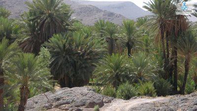 DMP-Mountains-Oasis-9