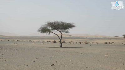 DMP-Sand Dunes-Merzouga3